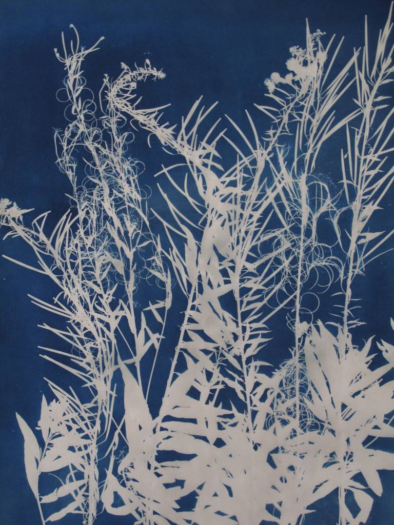 Artwork - Cyanotype of leaves